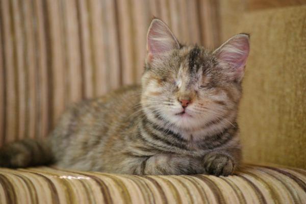 ослепший котенок