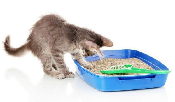 котенок в лотке с наполнителем