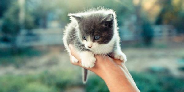 снится котенок на руках