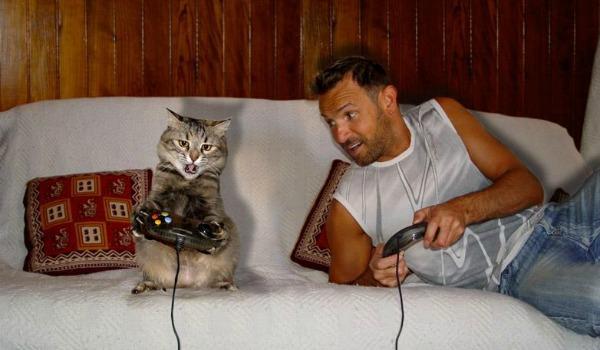 коты играется