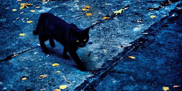черный котенок приснился