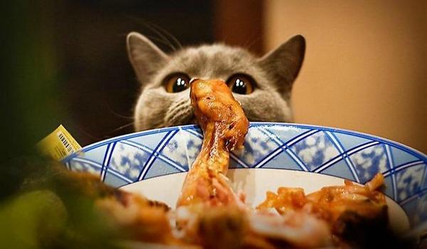 котенок ест курицу