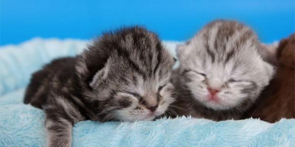 котятам 1 неделя