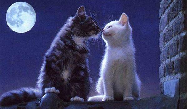 кошка на свидании с котом