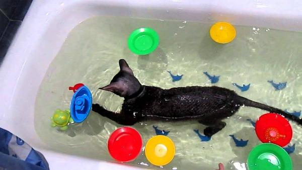 игрушки в ванну для кота