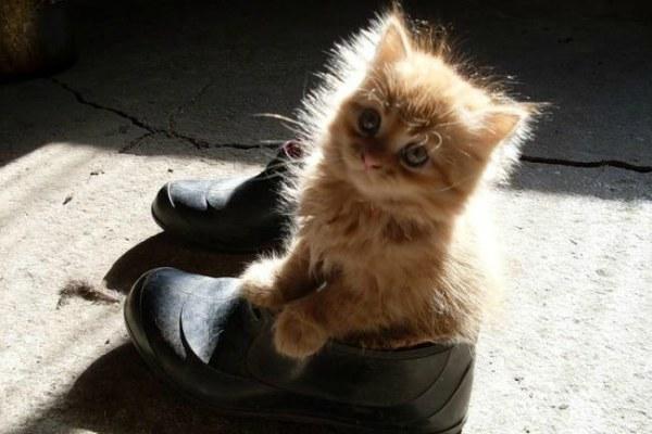 Кот нагадил на ботинки