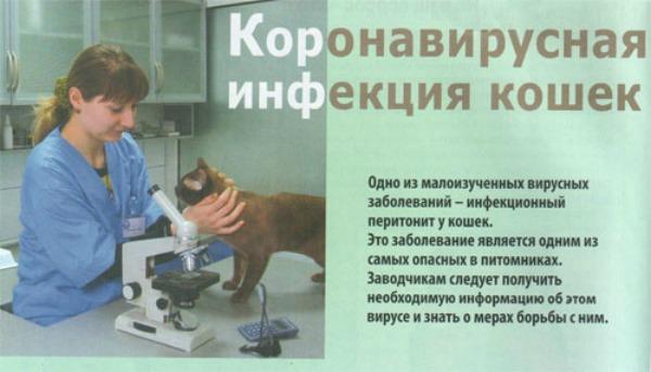 коронавирусная инфекция у кошек