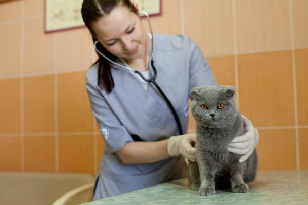 кошка на обследовании