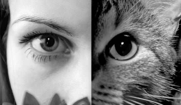 женщина превращается в кошку