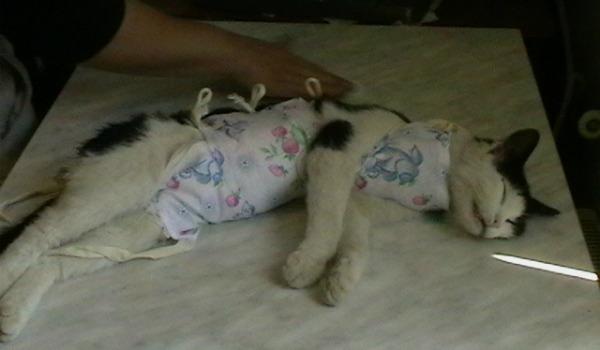 кошка после операции на подстилке