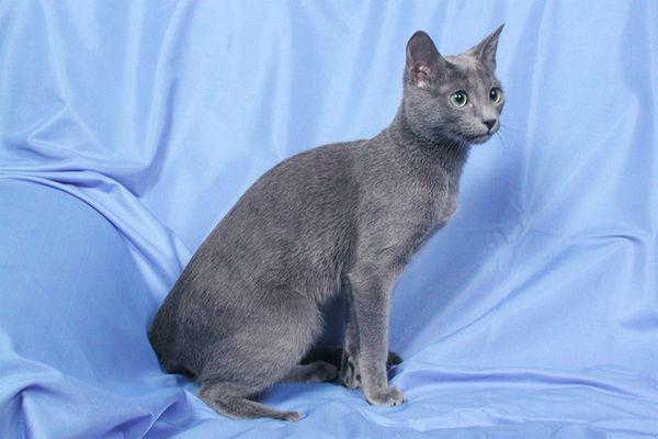 800127_cats[1]