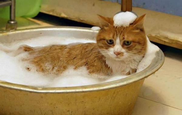помывка кота в ванной