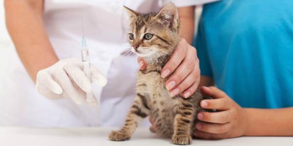 прививки котятам от вируса