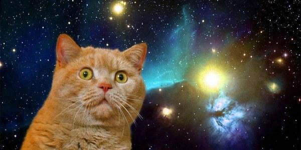 приснился рыжий котенок