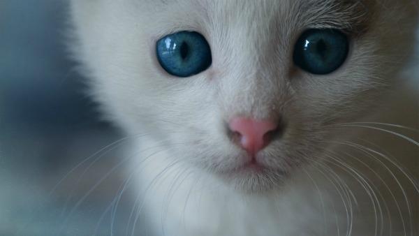 белая кошка с усами