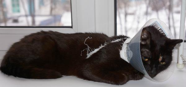 пластиковый воротник у кота