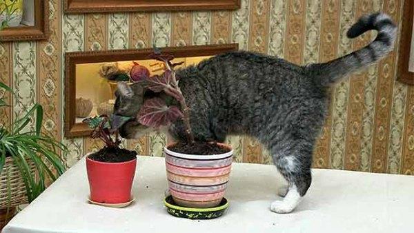 Котик мочится в горшок с цветами