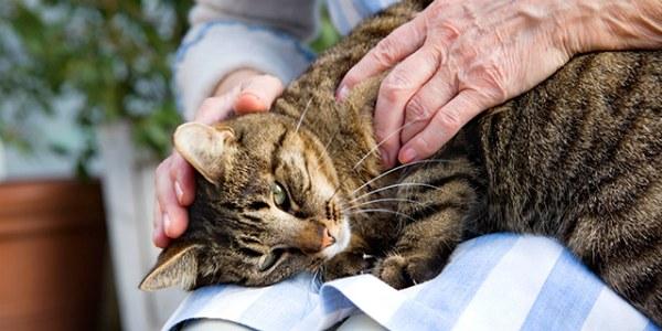 массаж кошке