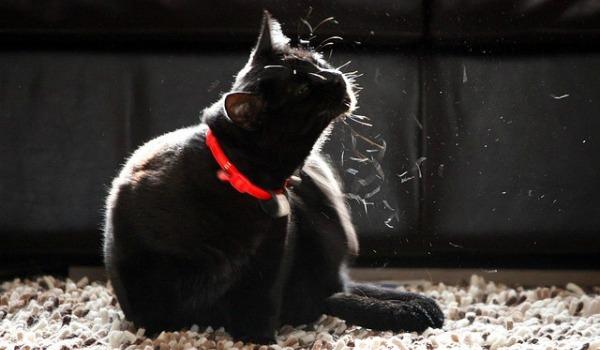 кот вычесывается