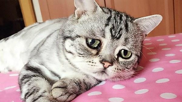 период для стерилизации кошки