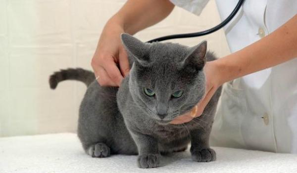 кошка с ветеринаром