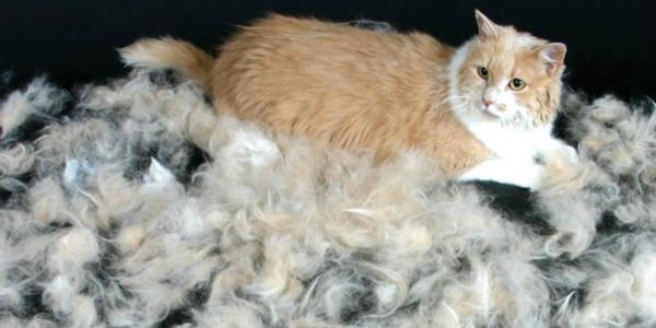 у кота лезет шерсть от питания