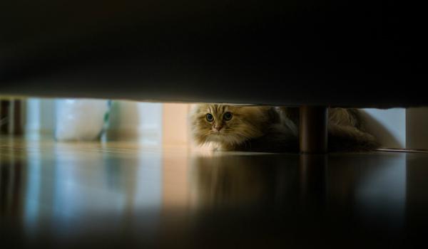 котенок написал под диван