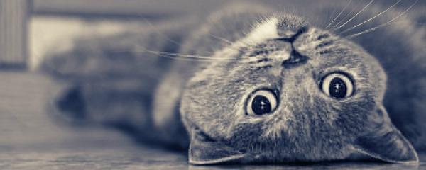 кошка ждущая котят