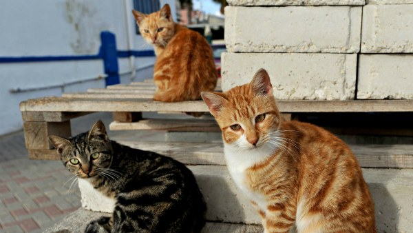 коты с кошками во дворе