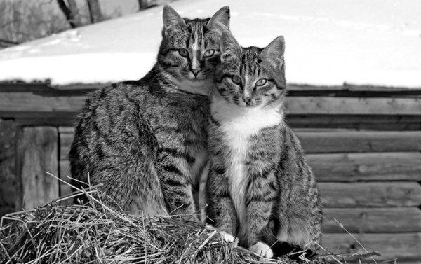 вязка кота с кошкой в первый раз
