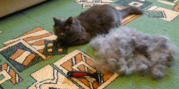 что делать если кошка сильно линяет