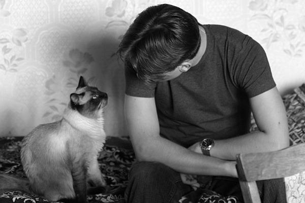 ругают кошку