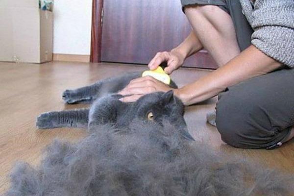 у кошки лезет шерсть что делать