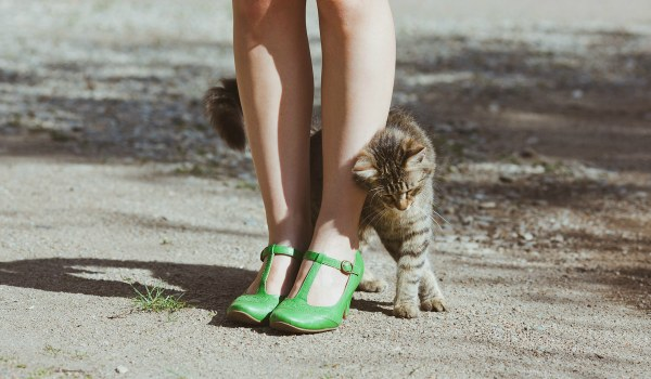 кошка трется об ноги