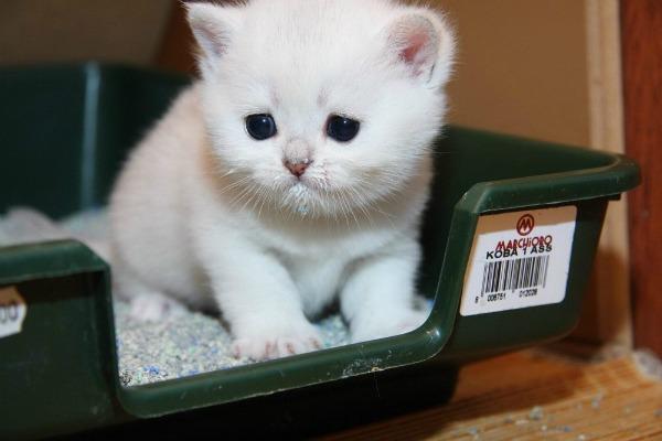 котенок знакомится с лотком