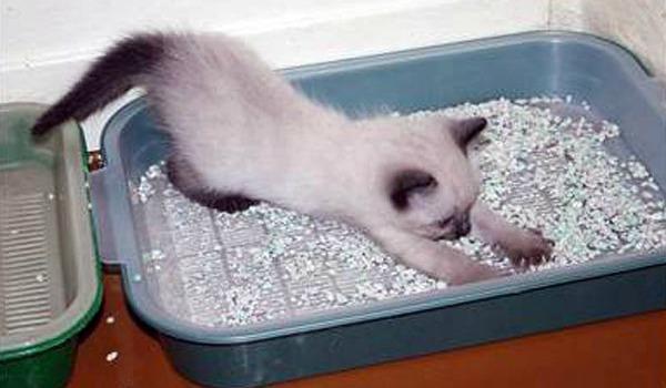котенок в 2 лотка