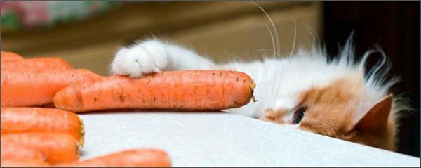 котенок ест морковку