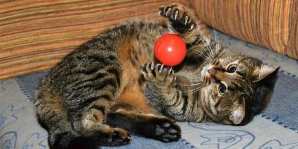 игривая кошка