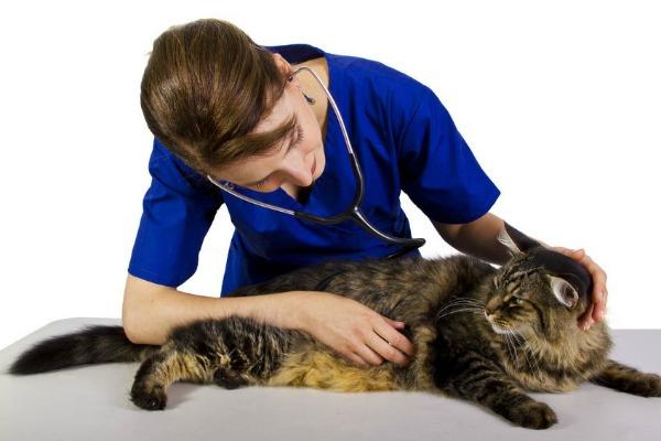 коты у ветеринара на приеме