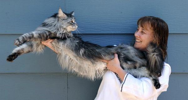 Кот Стьюи