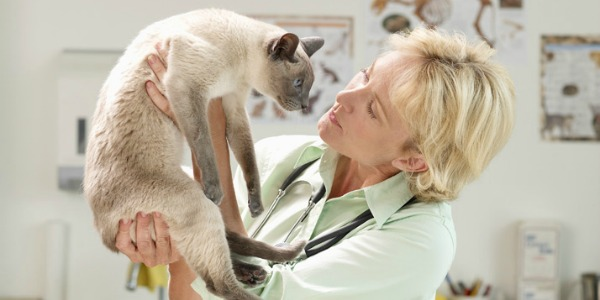 врач назначает витамины для шерсти кошки