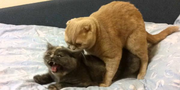 кот с кошкой вяжутся