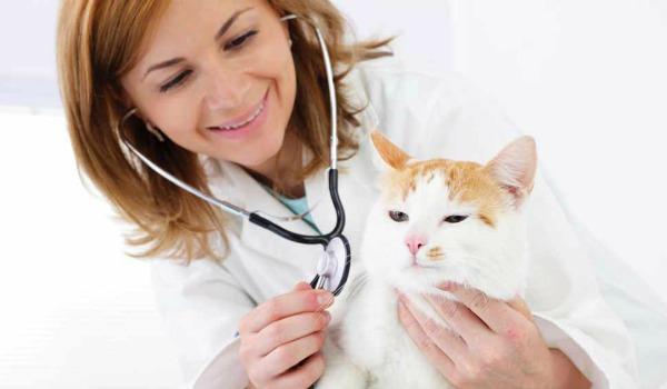 кошка у ветеринара на приеме