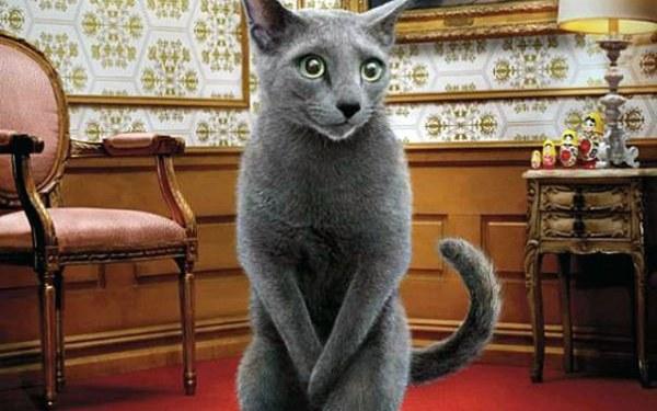 Котов кастрируют с 8 месяцев