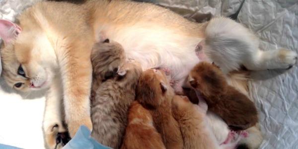 кошка родившая котят