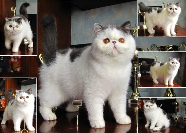 питомник кошек
