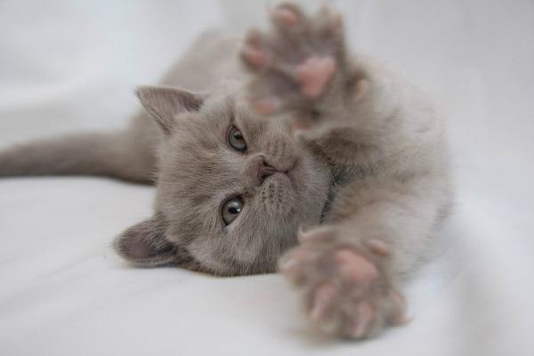 послушный котенок