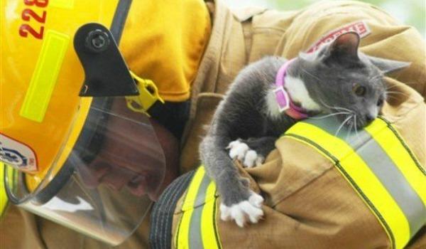 спасать котёнка