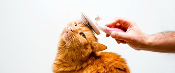 расчесывание котенка