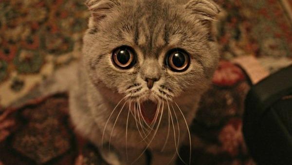 ругаем котенка